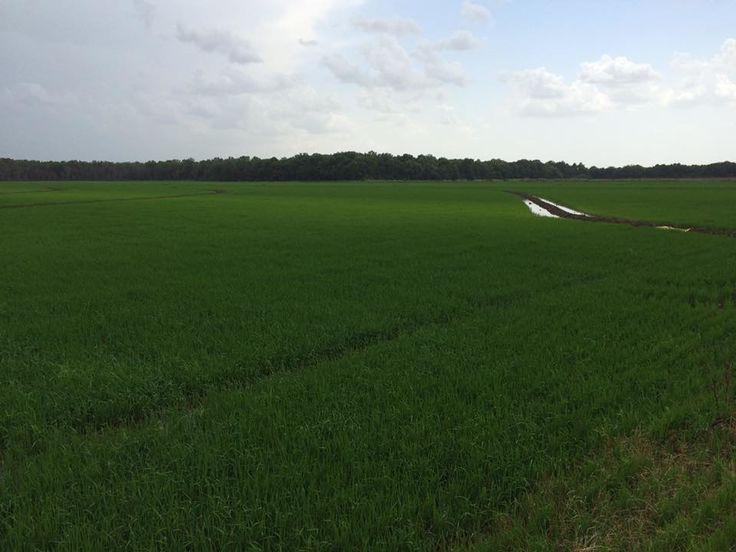Swindoll Darby Farm- Tunica County Mississippi