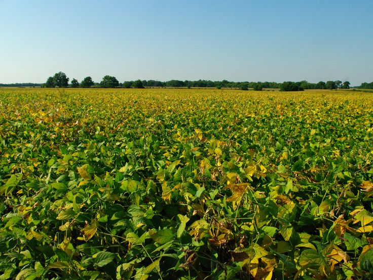Cleer Farm- Fulton County Illinois3