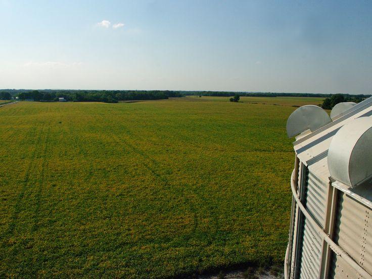 Cleer Farm- Fulton County Illinois